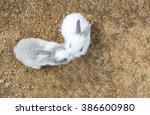 Stock photo cute small baby easter bunny white and gray rabbit kissing in heart like shape in the park top 386600980