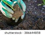 planting vegetables in the...   Shutterstock . vector #386644858