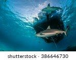 caribbean reef shark | Shutterstock . vector #386646730