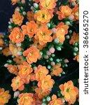 multiple small orange flowers... | Shutterstock . vector #386665270