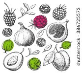 vector hand drawn food. fruit... | Shutterstock .eps vector #386725573