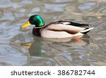 duck in the lake in nature | Shutterstock . vector #386782744