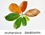 different stages of life cycle  ... | Shutterstock . vector #386804494