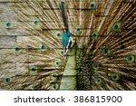 birds on the sandstone walls