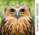 Stock photo funny owl face close up with big eyes 386883100