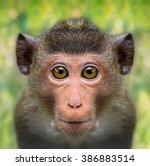 Funny Monkey Face Close Up Wit...
