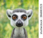 Stock photo funny lemur face close up with big eyes 386883523