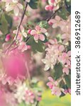 cherry blossoms on a branch in...   Shutterstock . vector #386912689