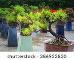 Row Of Bonsai Trees At A...