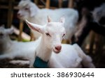 goat lovely | Shutterstock . vector #386930644