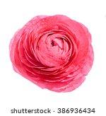 Red Ranunculus Flower ...