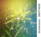 flower of life   the... | Shutterstock .eps vector #386974630