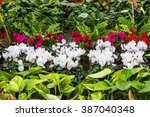 potted flowers for sale at a... | Shutterstock . vector #387040348