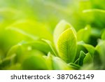 Stock photo closeup nature view of green leaf in garden at summer under sunlight natural green plants 387062149