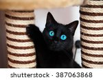 Stock photo black cat is playing 387063868