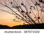 Silhouette Branch Tree At...