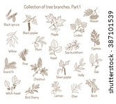 set of different  tree branches.... | Shutterstock .eps vector #387101539