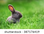 Stock photo little rabbit on green grass in summer day 387176419