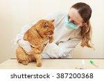 veterinary clinic. cute cat...   Shutterstock . vector #387200368