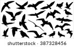 Set Of Birds Silhouettes 23 In...