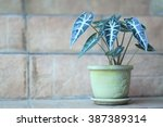 green caladium on staircase | Shutterstock . vector #387389314