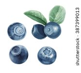 watercolor blueberry set  | Shutterstock . vector #387399013