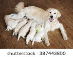 Stock photo happy dog feeding her puppies 387443800