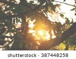 Sun Going Through The Branches...