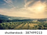 blue sky over olive field in... | Shutterstock . vector #387499213