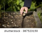 A Male Gardener Sowing Seeds O...