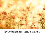 beautiful cosmos flowers soft... | Shutterstock . vector #387565753