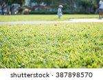 green grass in garden with... | Shutterstock . vector #387898570