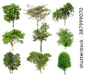 tree collection set isolated on ... | Shutterstock . vector #387999070
