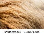 lion fur background texture... | Shutterstock . vector #388001206