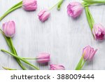 Fresh Pink Tulip Flowers On...
