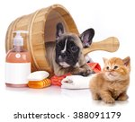 Stock photo puppy bath time french bulldog puppy in wooden wash basin with soap suds 388091179