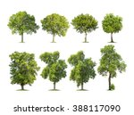 collection of isolated trees on ... | Shutterstock . vector #388117090