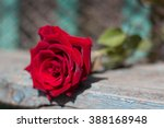 Red Rose Background. Red Rose...