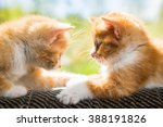 Stock photo two cute kittens playing on the couch 388191826