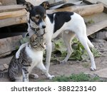 dog and cat together | Shutterstock . vector #388223140
