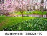 pink blooming sakura on the... | Shutterstock . vector #388326490