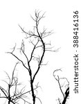 branch silhouette on a white... | Shutterstock . vector #388416136