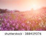 waew wichian flower  angelonia...   Shutterstock . vector #388419376