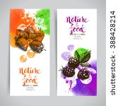eco food banners set.... | Shutterstock .eps vector #388428214