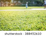 green grass in garden with... | Shutterstock . vector #388452610