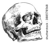 hand drawn human skull  sketchy ... | Shutterstock .eps vector #388578568