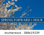 spring time change  a tree in... | Shutterstock . vector #388619239