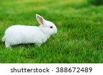 funny baby white rabbit in grass | Shutterstock . vector #388672489