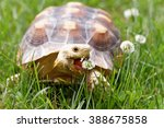 Cute Turtle Crawling On The...