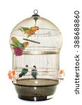 Cage With Lovebirds In Front O...